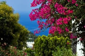 Enchanting Capri